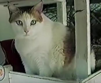 Creme Puff, il gatto più vecchio del mondo