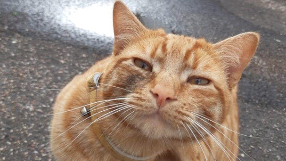 Notizie gatti Gennaio: Cupido il gatto rosso che è tornato al suo paese natale