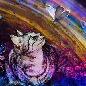La leggenda del ponte arcobaleno, gatto nell'arcobaleno