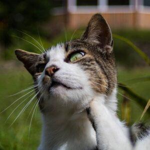 Le zecche nel gatto: cura e  prevenzione