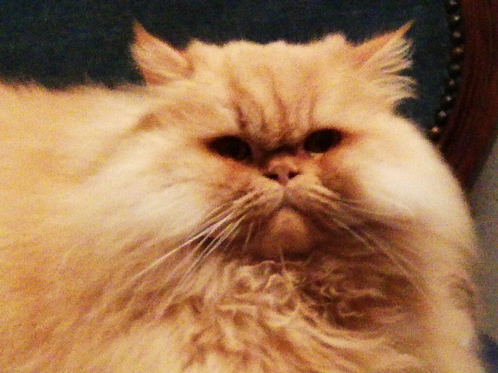 Eraldo, gatto rosso