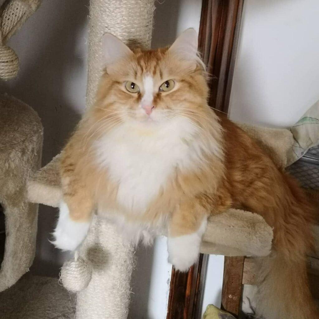 Fly, un meraviglioso gatto rosso