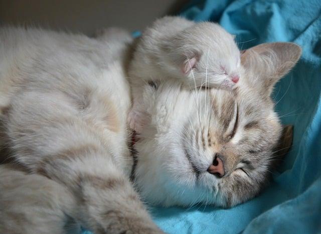 Gatta con gattinoche dormono