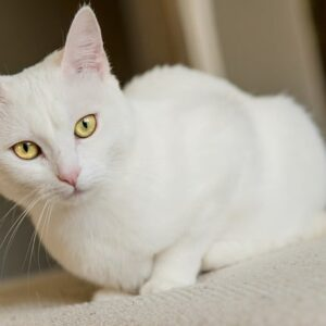 Sognare gatti: significato, simbologia ed interpretazione