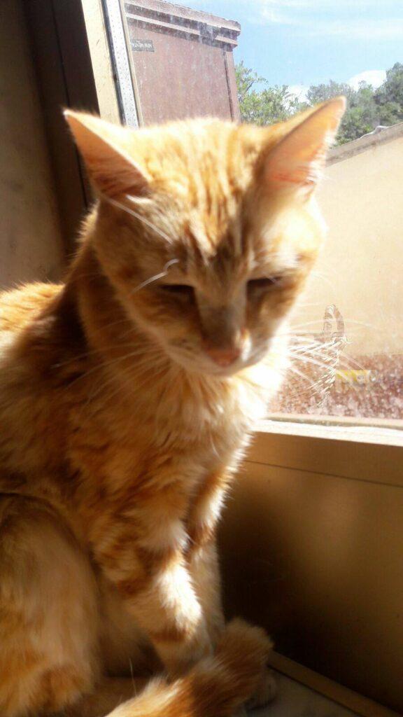 Foto gatti rossi Manto