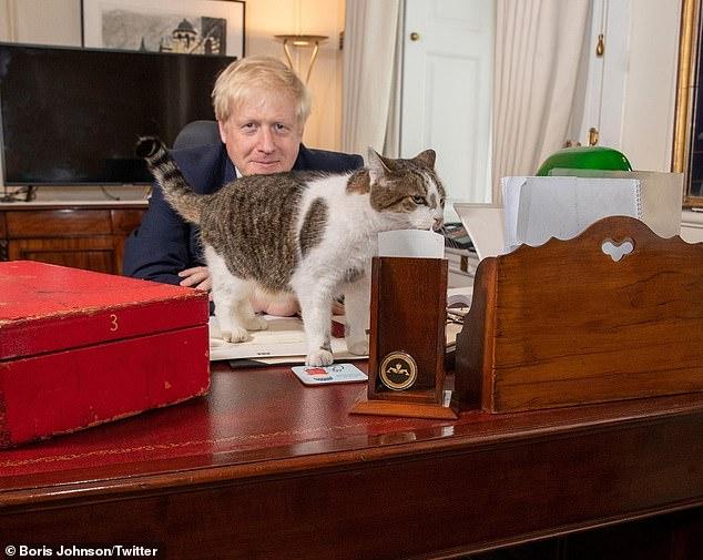 notizie sui gatti febbraio,  Larry The Cat ha festeggiato i 10 anni a Downing Street