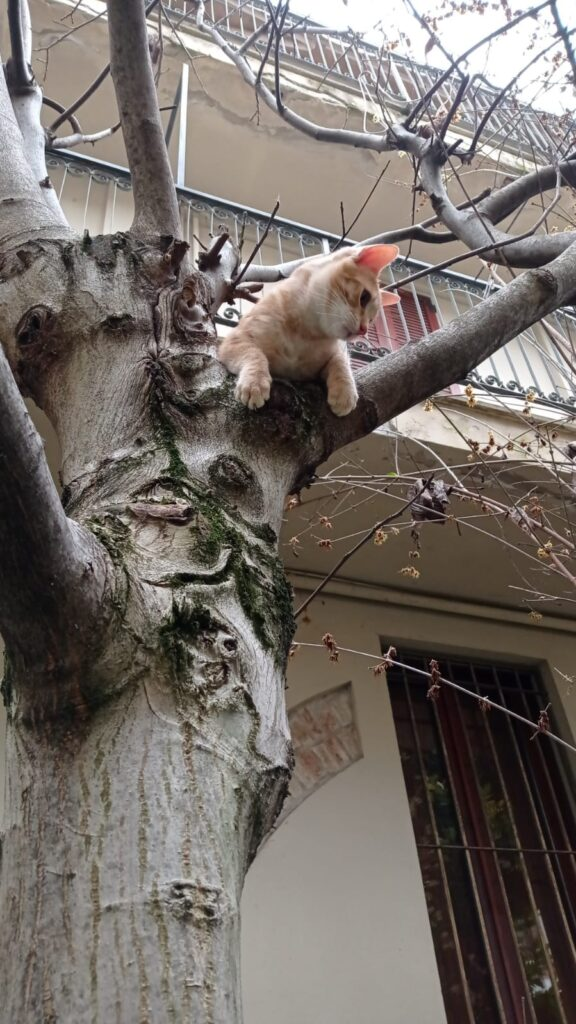 Spritz, gattina rossa