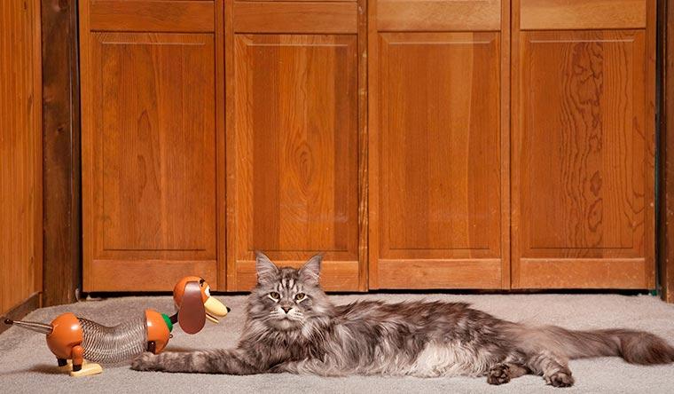 Gatti da record, Stewie, il gatto più lungo di tutti i tempi