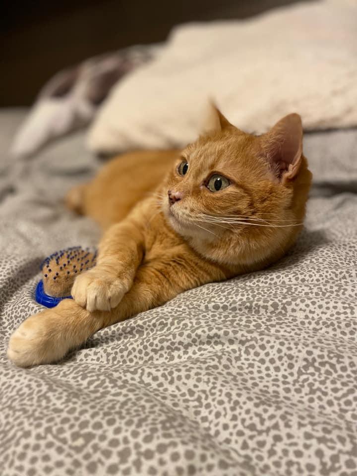 Sunny, un bellissimo gatto tigrato rosso