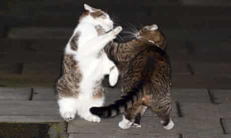 Larry e Freya che lottano