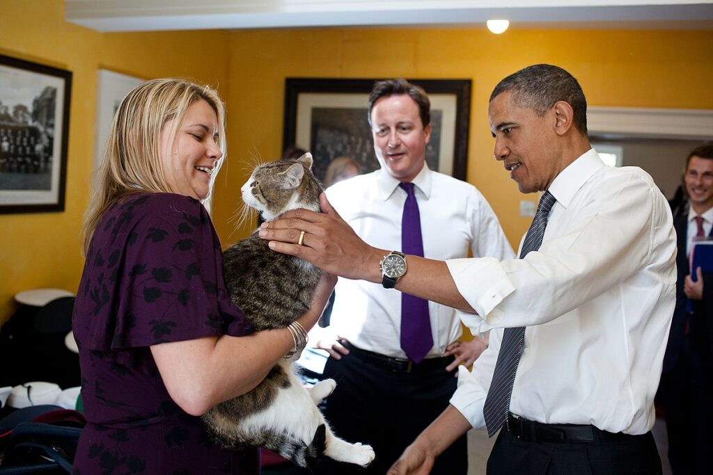 Larry the cat of  Downing street  incontra Obama