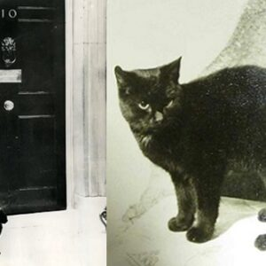 Peter e Peta, tra i primi chief-mouser-to-the-cabinet-office
