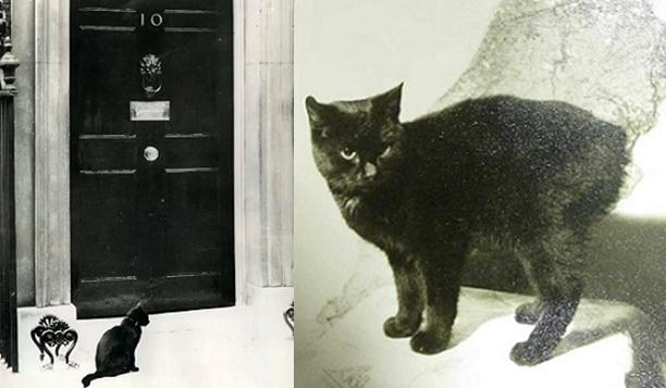 Chief Mouser to the Cabinet Office, cacciatopi capo all'ufficio di gabinetto