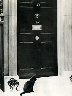 Peter, il primo chief-mouser-to-the-cabinet-office ad essere fotografato