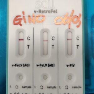 Test FIV FeLV rapido