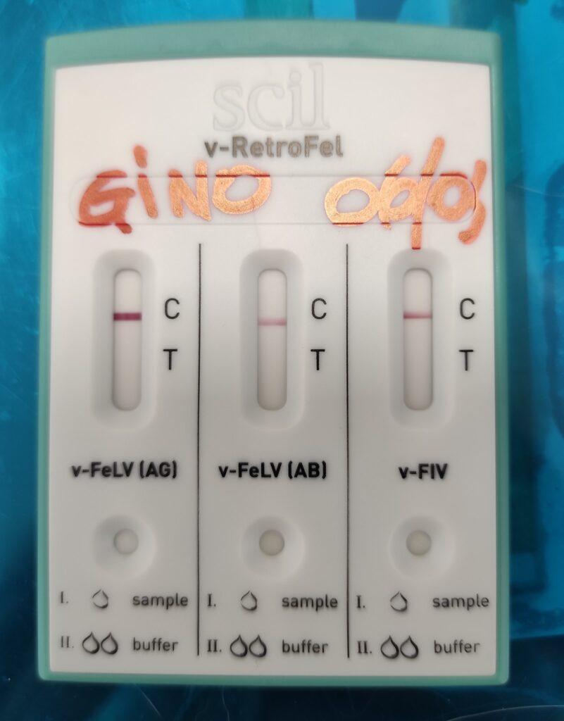 Test FIV FeLV, esempio di test negativo .sono presenti solo le linee di verifica