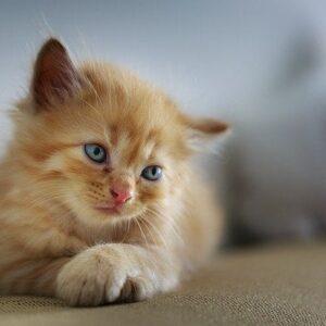 Diarrea nei gattini: cause e trattamento
