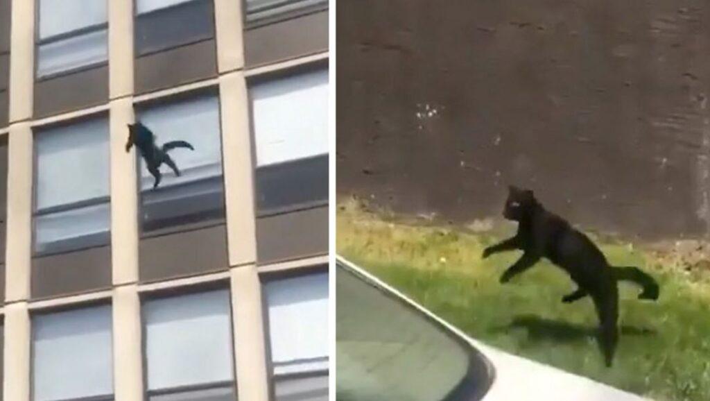Gatto salta dal 5° piano per sfuggire ad un incendio. rimbalza sul prato e scappa via