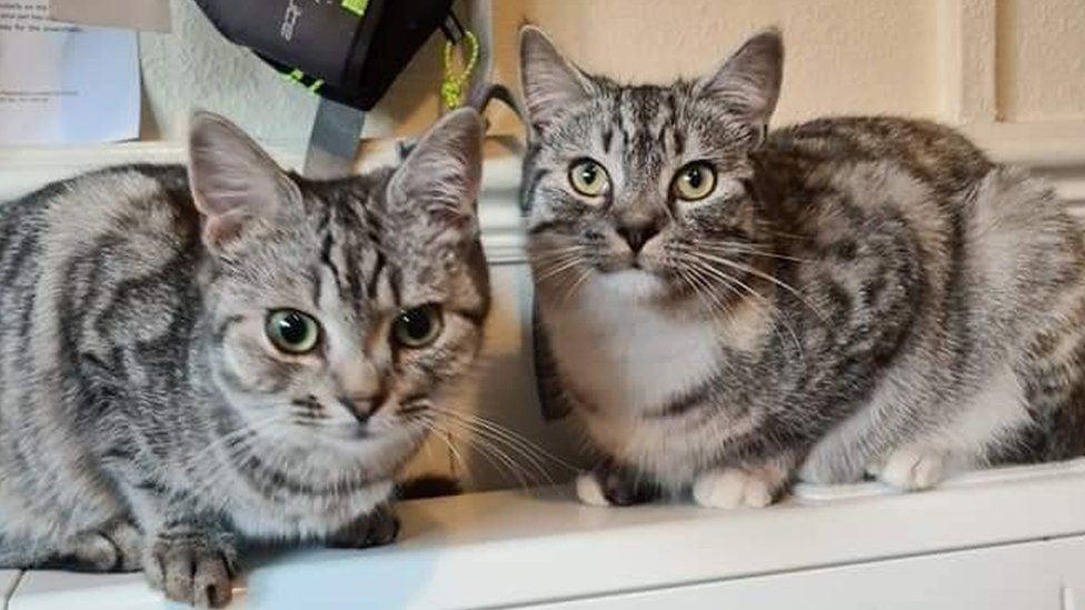 Notizie gatti Maggio 2021, Grifondoro il gatto bloccato sul palo della luce con la sorellina Joker