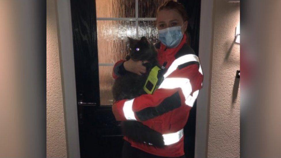 Notizie sui gatti Aprile 2021, Norman, il gatto intrappolato nella fognatura salvato dai vigili del fuoco