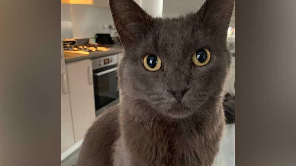 Norman il gatto rimasto intrappolato in una fognatura profonda 5 mt
