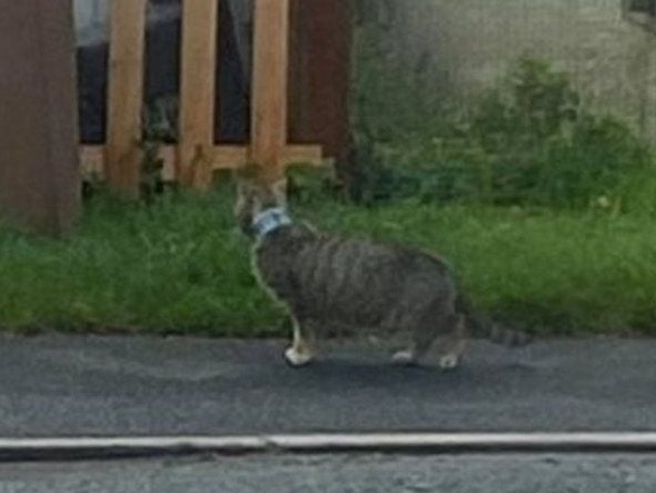 Notizie gatti Maggio 2021: Gatto con scatoletta di tonno attorno al collo