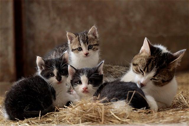 mamma gatta e gattini