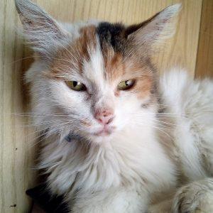 Calicivirosi gatto: cos'è, sintomi, terapia e prevenzione