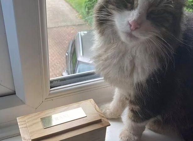 """Gatto torna a casa dopo """"essere stato cremato""""!"""