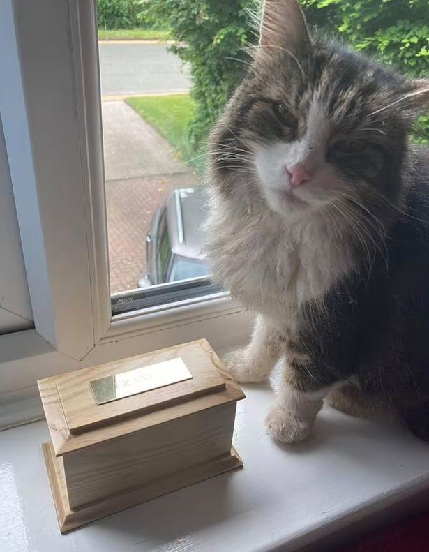 Frankie, il gatto tornato a casa dopo che la famigliia credeva di averlo cremato