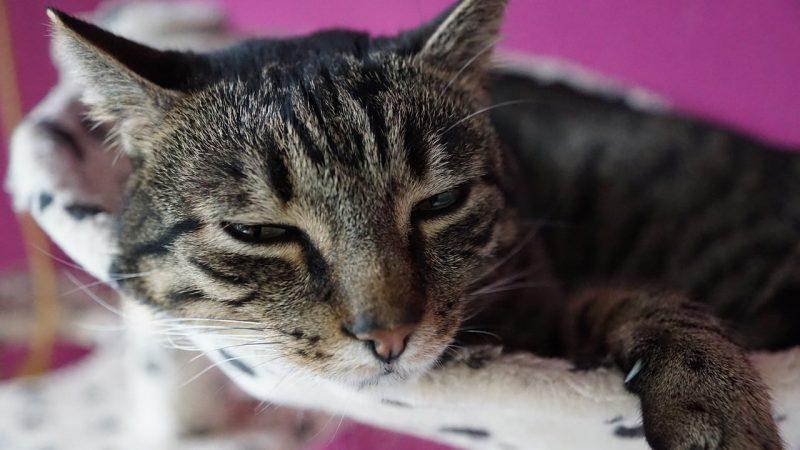 Rinotracheite gatto: cause, sintomi, terapia e prevenzione